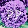 purple_peony